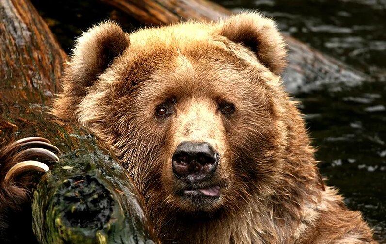 L'Ours dans l'objectif